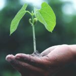 Sustainable-IT